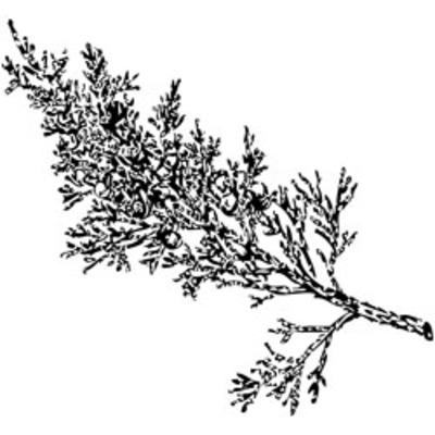 Branch_2_black