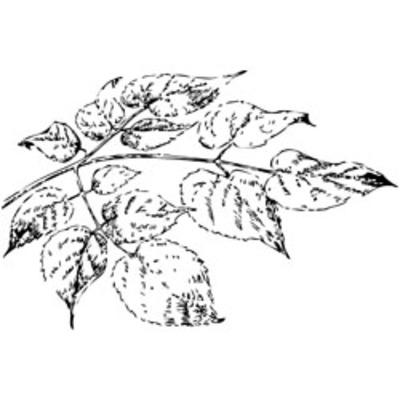 Leaves_black
