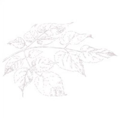 Leaves_white