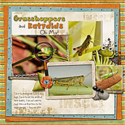 Grasshoppers_katydids_oh_my