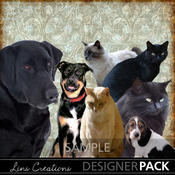 Dogsandcats_medium