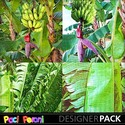 Banana_tree_small