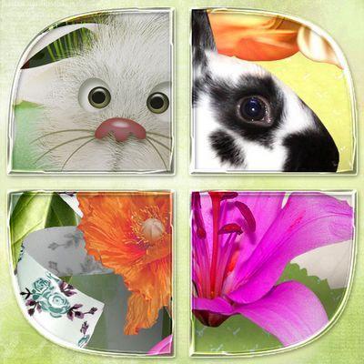 Butterflydsign_eggsandflowers_zoom