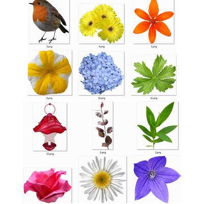 Fleurs10_image3
