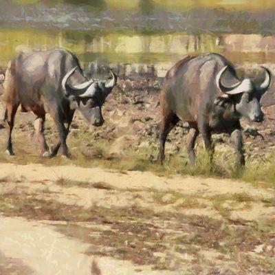 Wildsofafrica-022