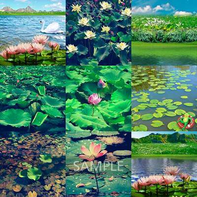 Water-lilies-pond4