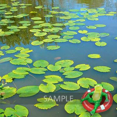 Water-lilies-pond6