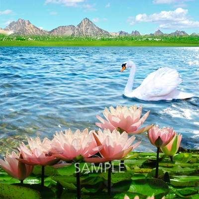 Water-lilies-pond7