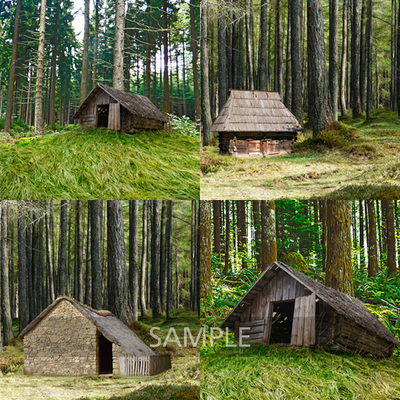 House_in_the_woods2
