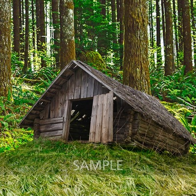 House_in_the_woods3