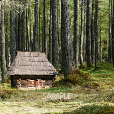 House_in_the_woods4