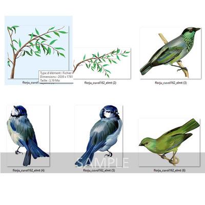 Florju_cuvol162_paintedbirds_zoom__1_
