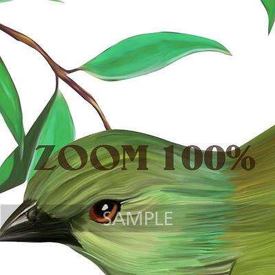 Florju_cuvol162_paintedbirds_zoom__3_
