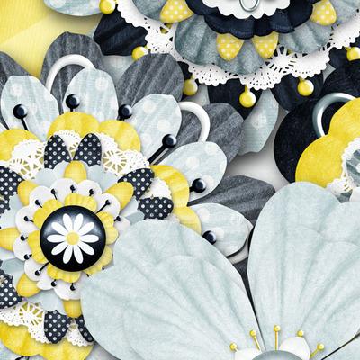 Lazy_daisy_flowers_cu_1