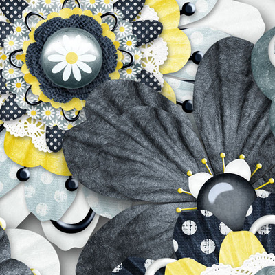 Lazy_daisy_flowers_cu_2