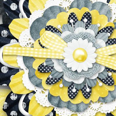 Lazy_daisy_flowers_cu_3