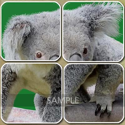 Detail02-koala