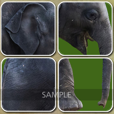 Detail-elephant