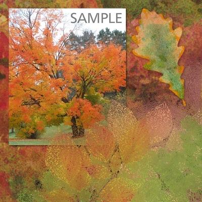 A_splash_of_autumn_overlays_1-02