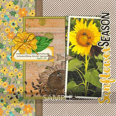 Jennifernv-sunflowersayings