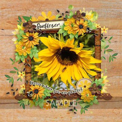 Irene-sunflowersayings