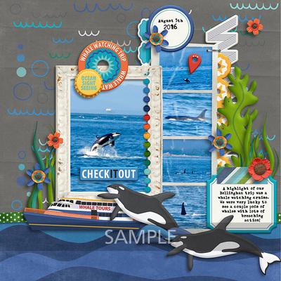 20160805-killer-whale
