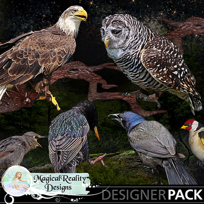 Birds-folder-mycu