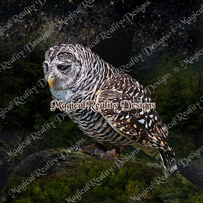 Magicalreality_paintedbirds2