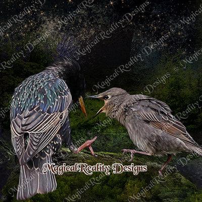 Magicalreality_paintedbirds3