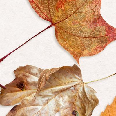 Cu_foliage06_600b