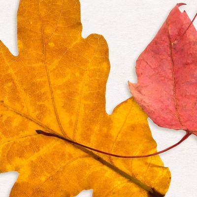 Cu_foliage06_600d