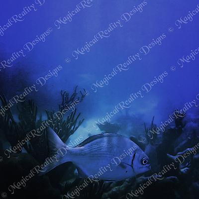 Magicalreality_underwater_bgs4