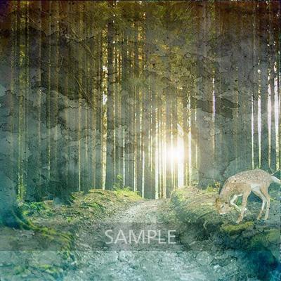 Stunning_forest4