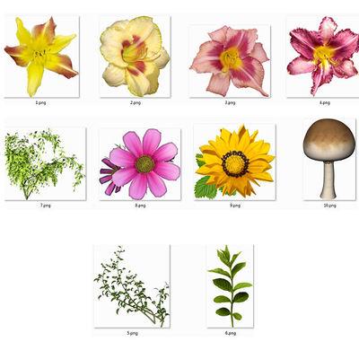 Pv_fleurs
