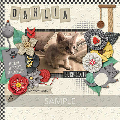 Pretty-paws-cats-10