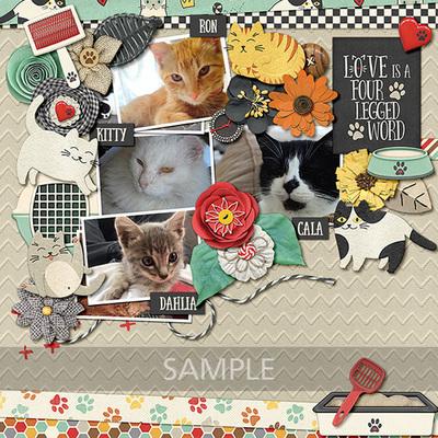 Pretty-paws-cats-11