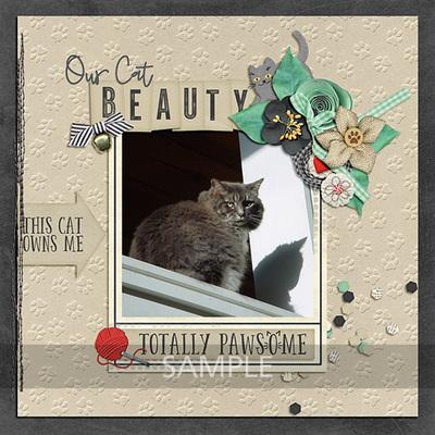 Pretty-paws-cats-15