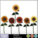 Autumn_sunflowers_small