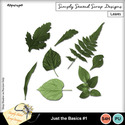 Asparagus_leaves1_mm_small