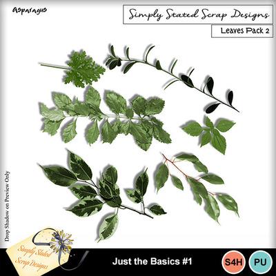Asparagus_leaves2_mm