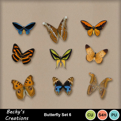 Butterlfy_5