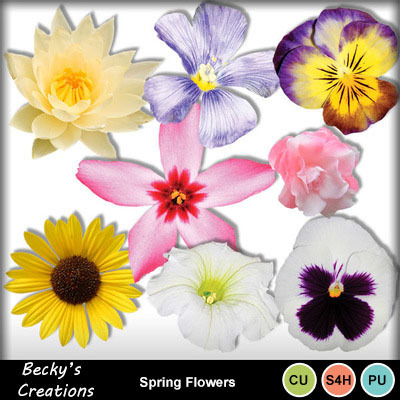 Extracted_spring_flowers