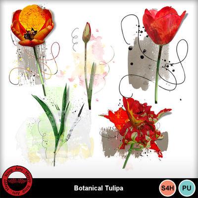 Botanicaltulipa__3_