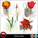 Botanicaltulipa__3__small