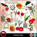 Botanicaltulipa__2__small