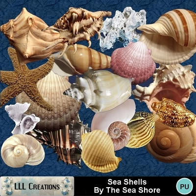 Sea_shells_by_the_sea_shore_-_01