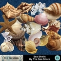 Sea_shells_by_the_sea_shore_-_01_small