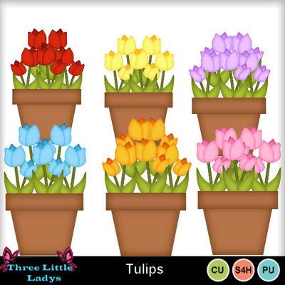Tulips-tll-2