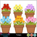 Tulips-tll-2_small