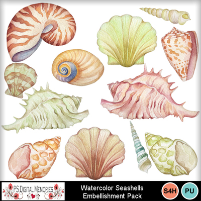 Wc_seashells